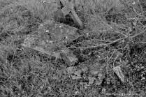 Yew Tree Cemetery (15)