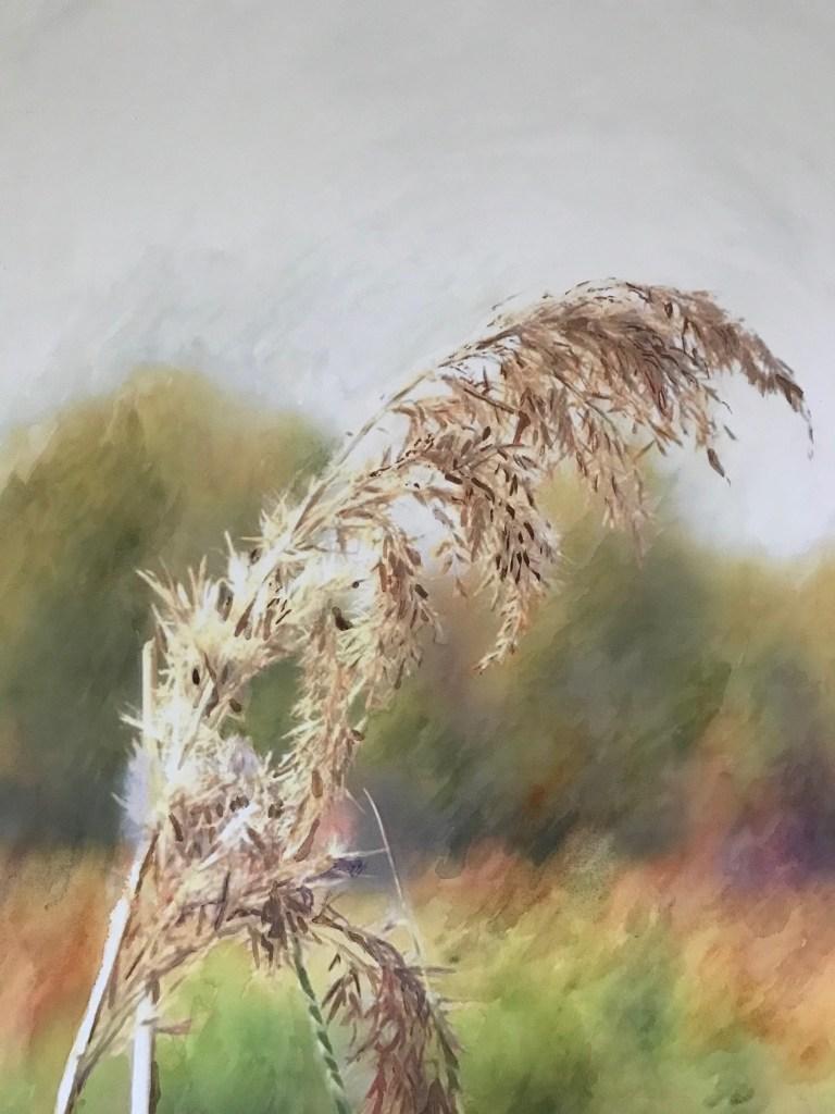 pampedna_watercolor-in-hahnemuhle-ahhniversary-edition-425gsm_36x48cm_2020_edna-carla-stradioto