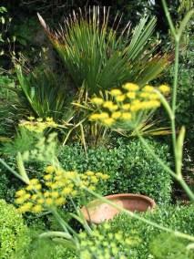 Herbs and Palms in Ednovean Farm's gardens
