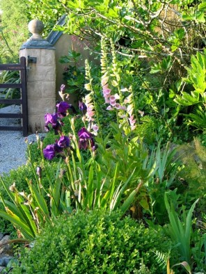 Late spring planting of Iris and foxgloves