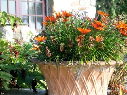 Vintage pot vintage daisy!