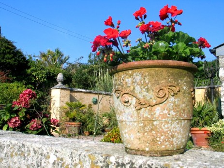 Geraniums top terrace