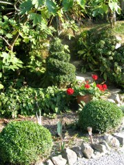 Topiary shapes