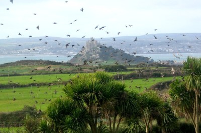 Birds above St Michael's Mounts