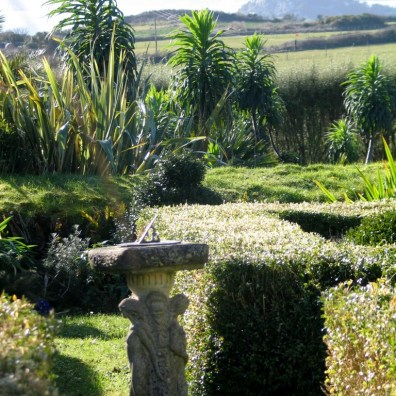 Echiums beyond the sundial garden