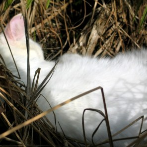Cat in the hedgerow