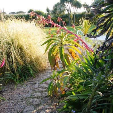 The last rays of sunshine catching a granite path flanked by grasses out into the garden