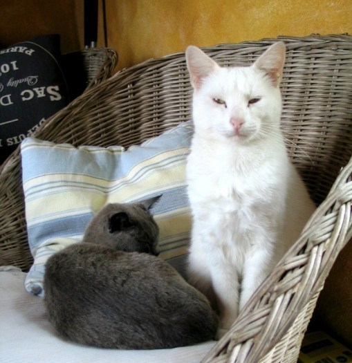 Two cats in a vintage habitat chair