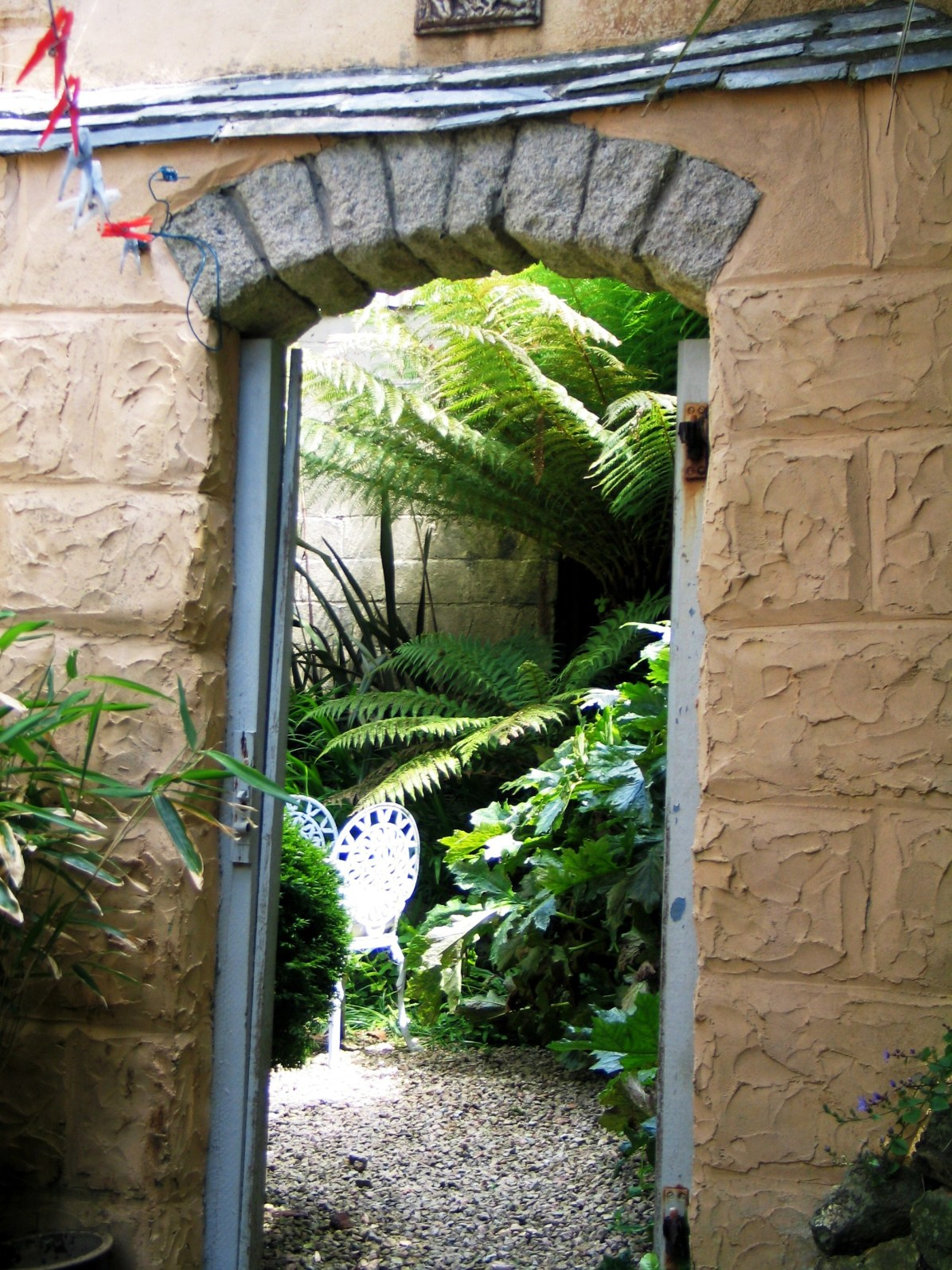 The drying courtyard with Tree ferns beyond