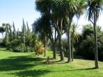 The palm avenue