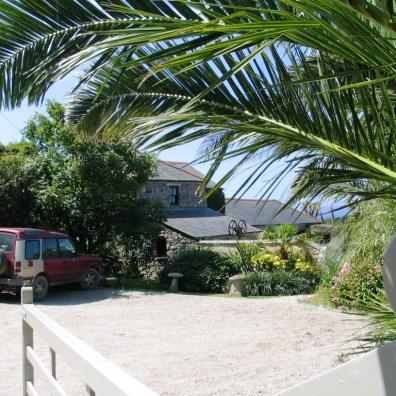 Date palms flank Ednovean Farm's car park