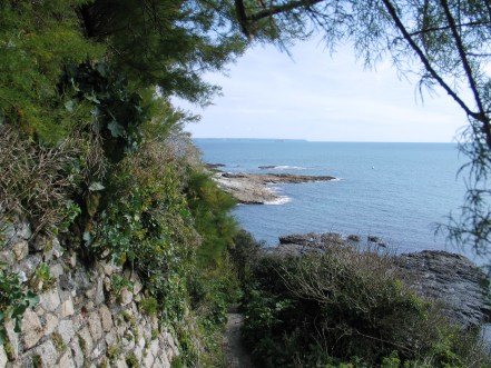 Tamarisk framing the aproach to prussia cove in Cornwall