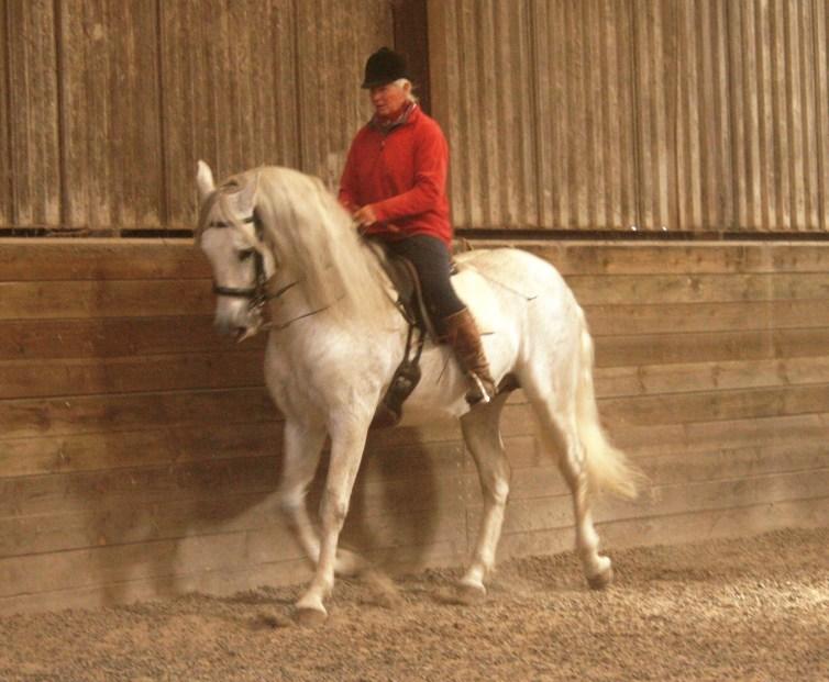 Spanish stallion in collection