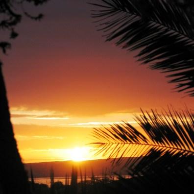 Palm trees at sunset at Ednovean farm