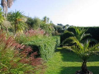 Russet grass seeds soften the borders with scoops in the hedges giving glimpses of the further gardens
