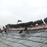 A wet morning and starlings arrive with noisy chatter