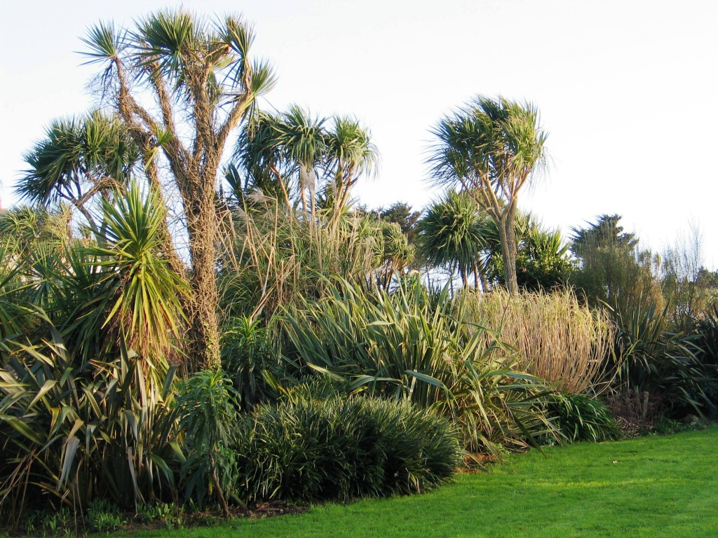 broad garden border of hardy coastal plants