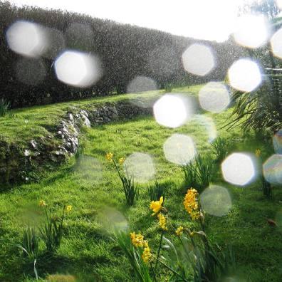 Raindrops in the sunshine