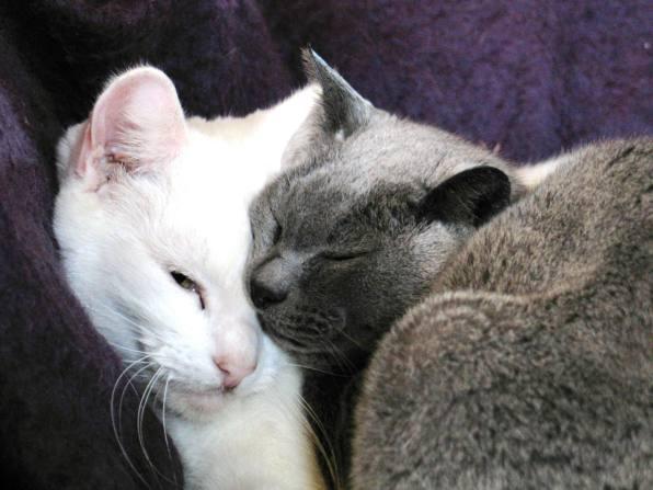 Ednovean Farm resident cats
