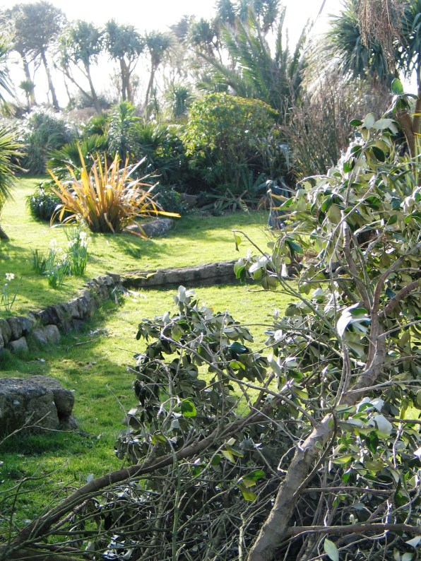 After the storm and the sun slants across the garden