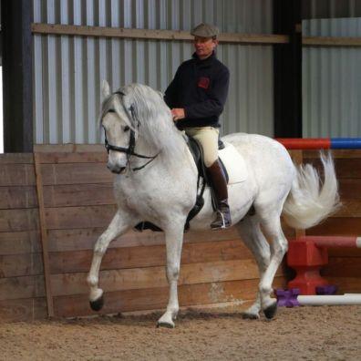 Danilon or Danni ridden by Antonio Borba Monteiro of the Portuguese School of Equestrian Art