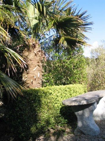The bench backed by a Chusan palm overlooking the Parterre