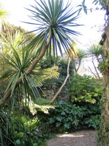 walled garden with subtropical planting