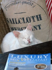 Spur cat reading Luxury Bed and Breakfast