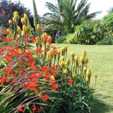 Crocosmia Lucifer and aloes make a vibrant display