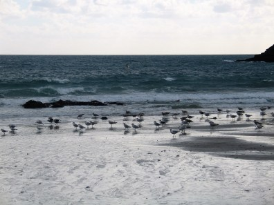 Sea birds on the waters edge