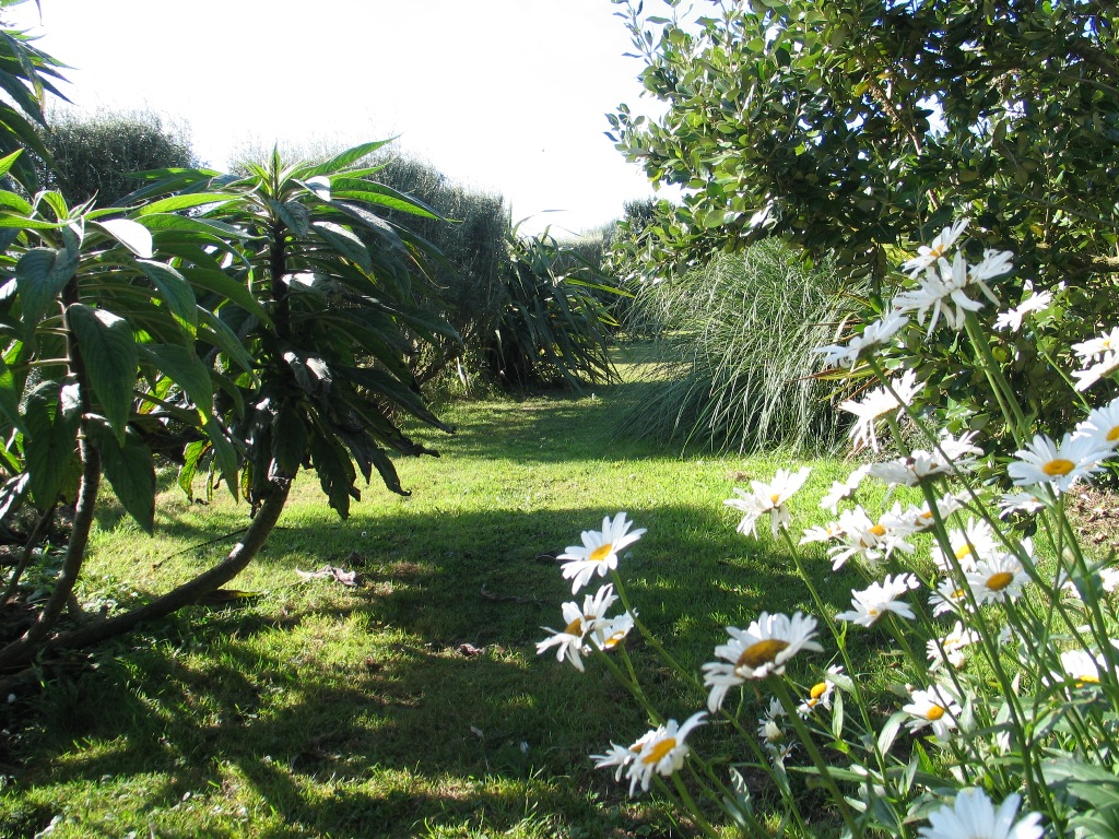 A long grass path with an entrance marked by daisies