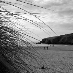 Marram grass ar dusk