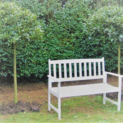 Garden bench flanked by standard bay trees