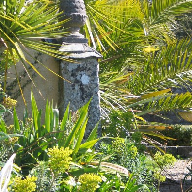 euphorbia and palms