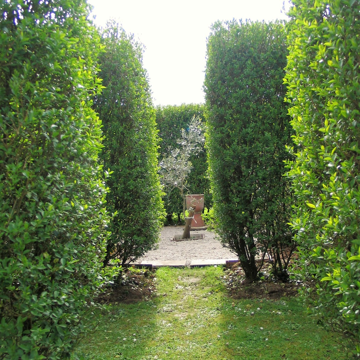View through formal hedges in garden rooms