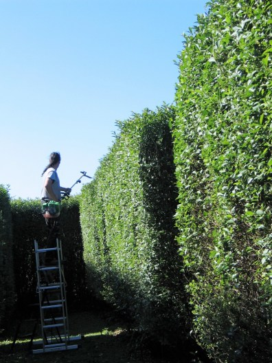 scaffolding for high hedge cutting