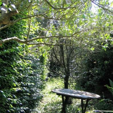 overgrown garden around Olive trees