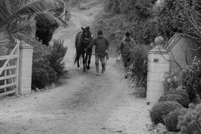 Training a young horse - coming home