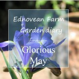 Garden diary for may - iris and urn