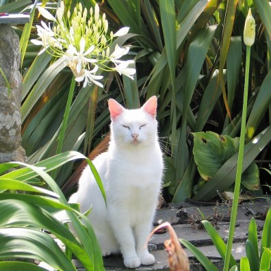 White cat with flower - july garden