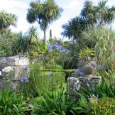 Summer terrace with blue agapanthus