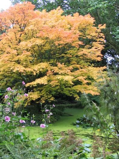 Tree lined pond