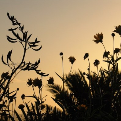 Foliage against a golden sky