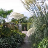 Tall pampas over cobbled path