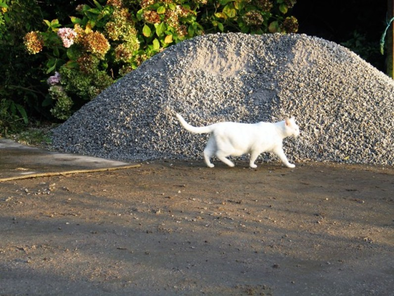 cat and gravel