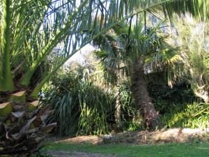 Jungle like planting - palms October garden
