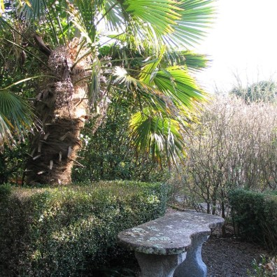 formal stone bench under palm tree