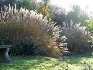 arch of grass caught in early morning sunshine