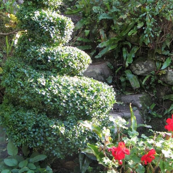 Topiary spiral in the November Garden