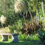 Tranquil garden bench - June Garden